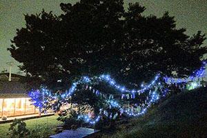 「こどもリビング」の「集いの木」のライトアップ